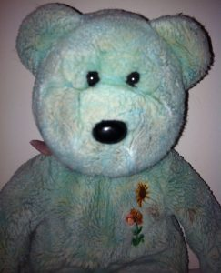 cropped-teddy-32.jpg