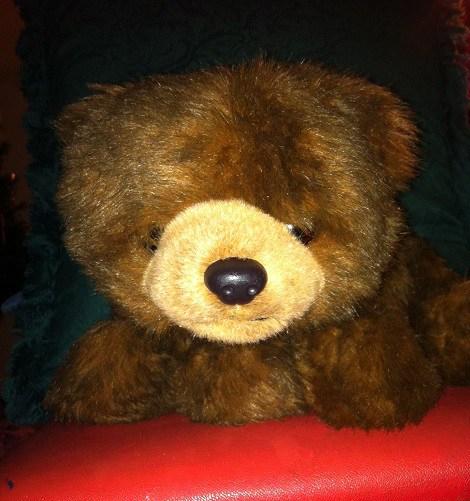 Teddy 41