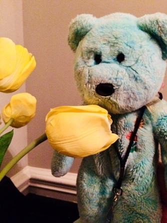 Teddy 05