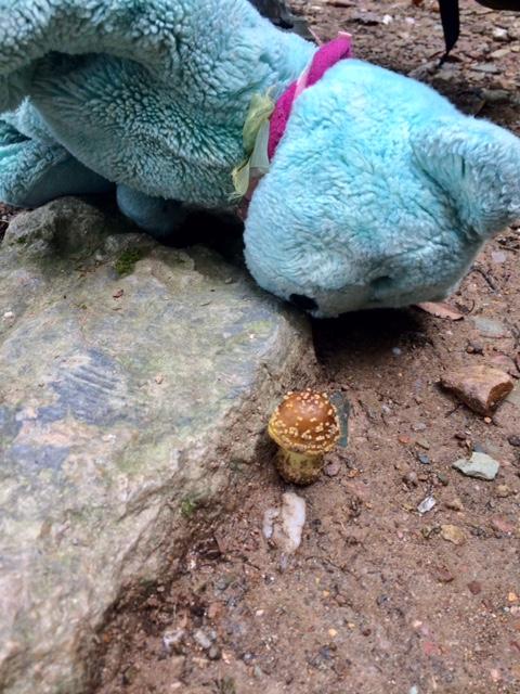 Hiking Teddy 01
