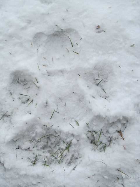 snow day 08